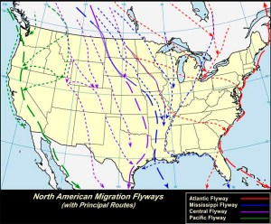 USGS flyway map