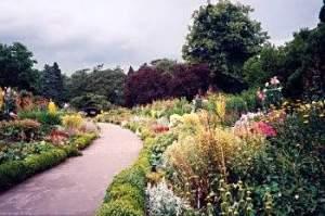 Dublin botanical gardens - beautiful flowers in bloom