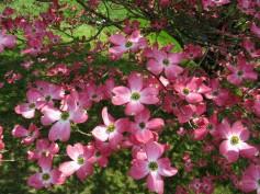 http://www.forestwander.com
