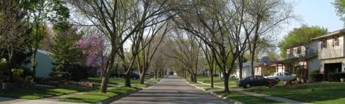 Urban-Forestry-Page-Gallery-Image-1